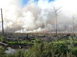 forest fire1