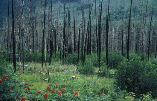 forest fire2