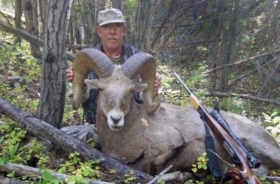 montana-bighorn-sheep-hunt