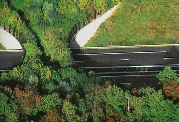 wildlife-corridor