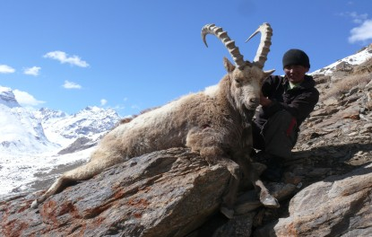 Tajikistan Ibex