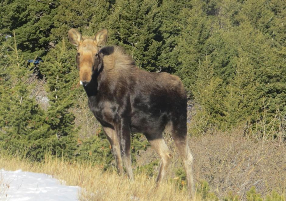 Montana Fish, Wildlife & Parks