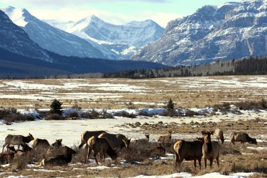 elk landscape_SCIF (2)