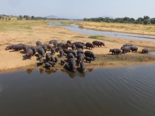 H101 Hippo pool during peak wet season with clean water.JPG