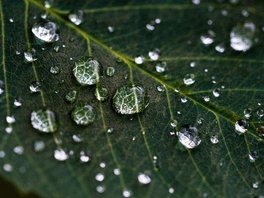 Leaf and Water Droplets.jpg