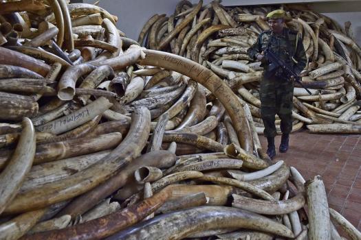 Kenya's Ivory Vault_KWS.jpg