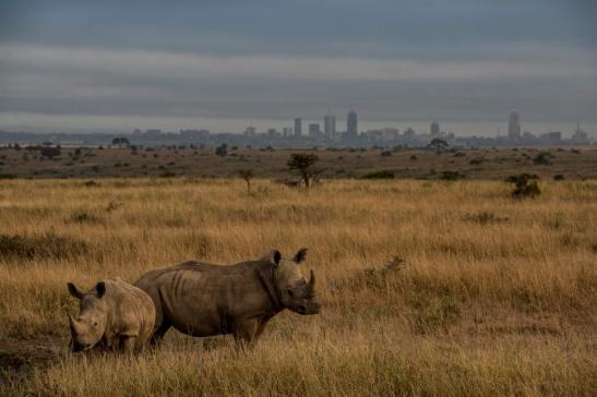 01-nairobi-train-rhinos.adapt.1190.1