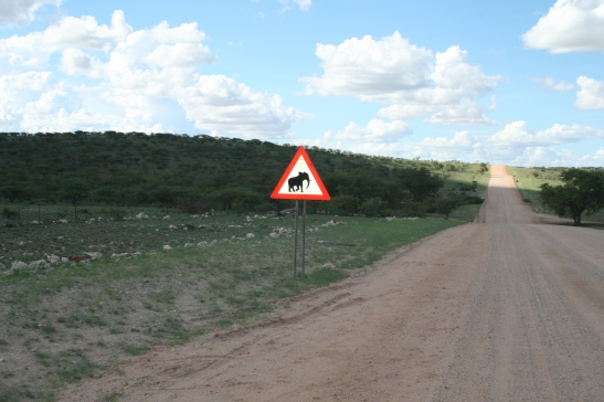 NW Namibia ele crossing
