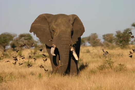Elephant 2_Tuscan Folder
