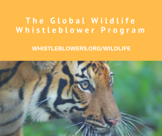 The Global Wildlife Whistleblower Program Photo 1