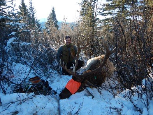 Hans Martin Bull Elk Capture 1.4.2018