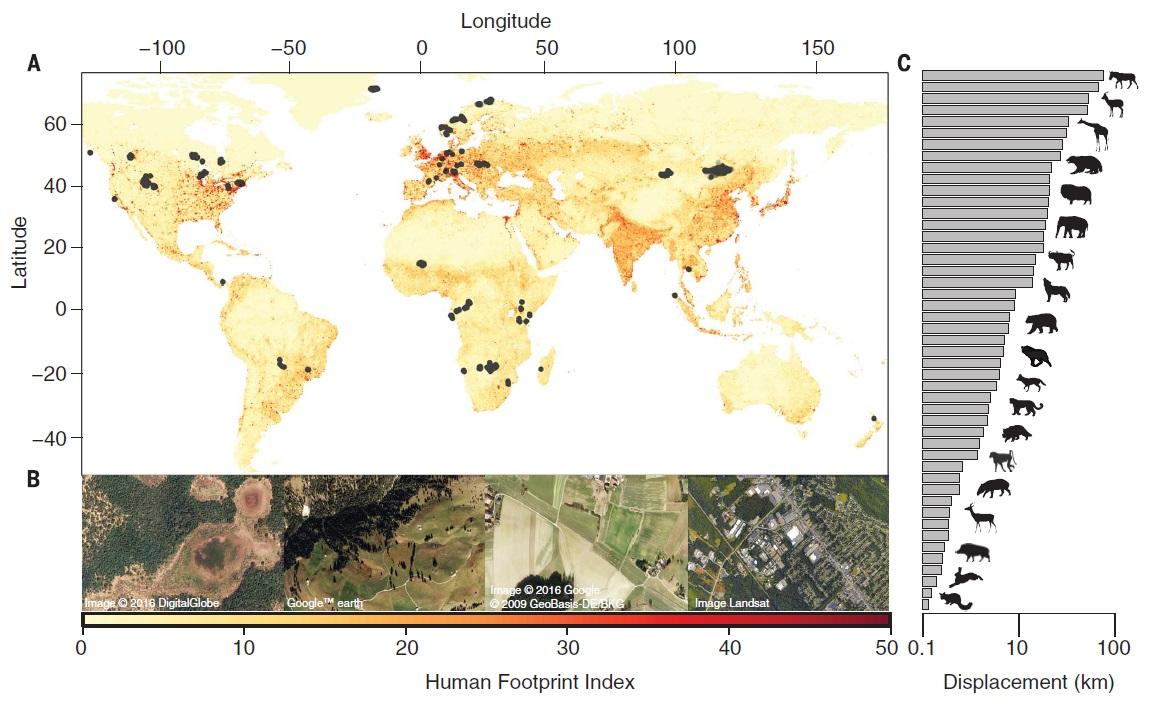 Human Footprint Index Map.
