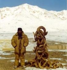 Pamir Argali Survey_2002 antlers