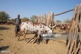 Namibia Herdsmen