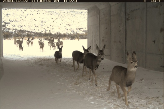Wildlife underpass. WY Hwy 30. MigrationInitiative.Org 2
